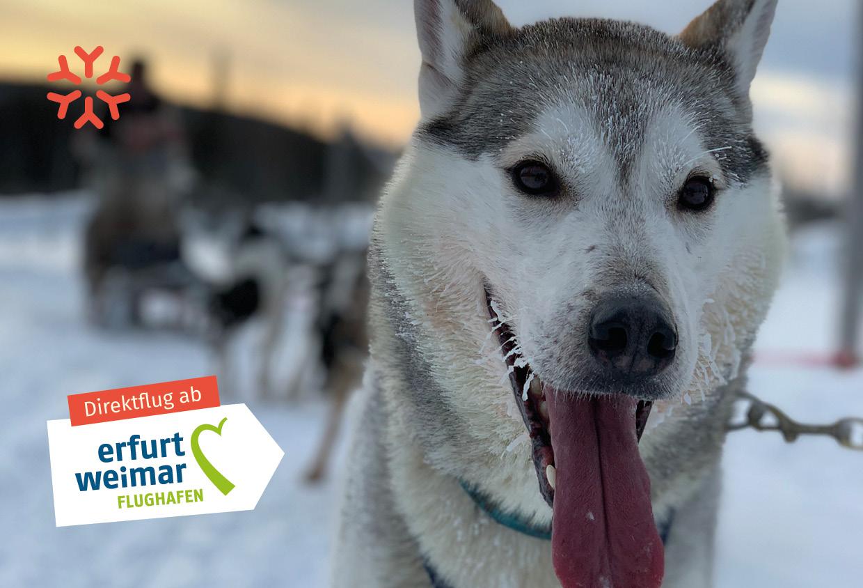 Ehrke Exklusiv Reisen - Lappland Kuusamo